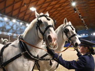 Bild: pferdbodensee.de