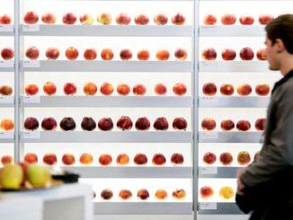 Bild: fruchtwelt-bodensee.de
